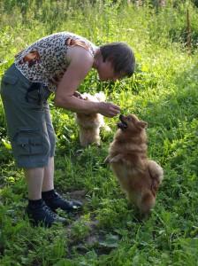 Трюковая дрессировка собак. Обучение шпица.