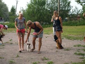 Как приучить собаку к поводку,джек-рассел терьер.