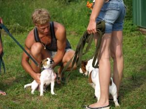 Как приучить собаку к поводку. джек-рассел терьер, терьер джека-рассела.