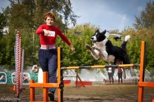 Как принять участие в семинаре по аджилити с Мариной Серовой  в Пушкине (СПБ)