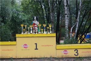 собака тренера мастер-класса по аджилити Марины Серовой.