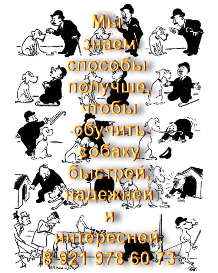 ОКД на дрессировочной площадке в Пушкине