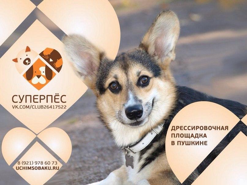 Баннер дрессировочной площадки для собак в Пушкине.