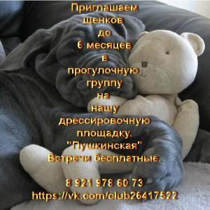 """Бесплатная группа для щенков на дрессировочной площадке """"Пушкинская"""""""